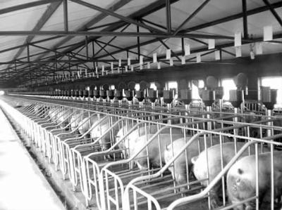 养猪场排粪设计图