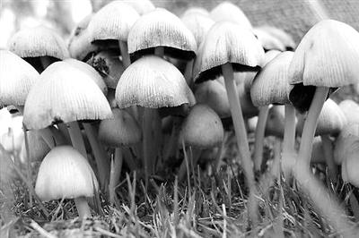 栎树下,有毒蘑菇往往生长在阴暗