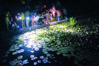据了解,辰山植物园,上海动物园夜宿,夜游活动也十分火爆,前几期的名额