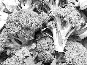 一过,各种时蔬草木抽枝发芽,食草动物的美食季到来了.有四种